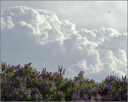Dragonflies, Thunderheads, and Lilacs - June 1, 2008 in Alberta