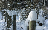 Fencepost hats made of snow in the Alberta foothills - Dec.27, 2008