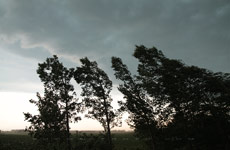 Poplars at their snapping point as the gust front blows past - Aug.1, 2009