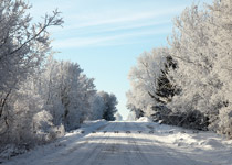 Country road lined with rime trees - Dec.25, 2009