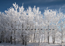 Thick rime covers trees west of Red Deer,AB - Dec.25, 2009