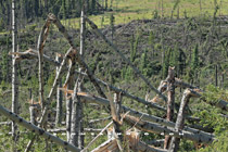 Tornado damage in the Alberta foothills west of Sundre - August 15, 2010