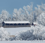 Frosted New years day west of Red Deer,AB - Jan.1, 2011