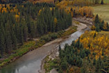 Fall colors along the Little Red Deer river - Sept.23, 2011