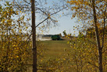 Combine chews canola west of Innisfail,AB - Sept.26, 2011
