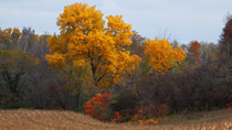 Fall color north of Springford, Ontario - October 13, 2011