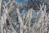 Frosty morning west of Red Deer, AB - March 2, 2012