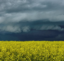 Thunderstorm over the canola patch. Near Benalto, AB looking north towards Eckville - 7:08pm July 14, 2013